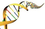 DNA Testing NY