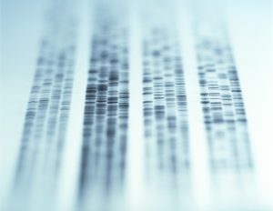 How far can DNA be traced back with accuracy?